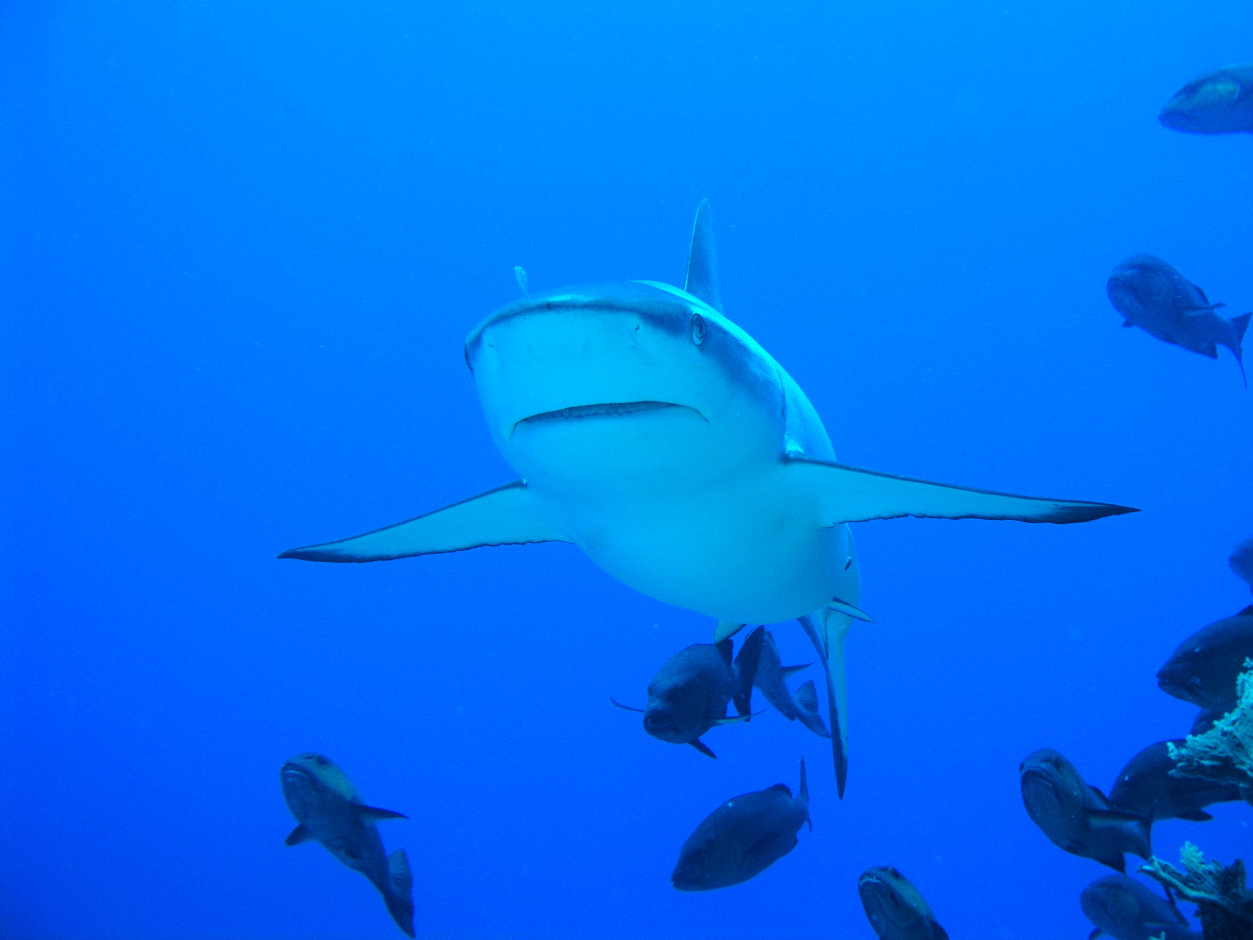 Shark & Ray Conservation Week (Part 6 of a 6-part series