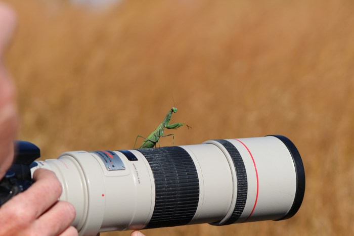 Praying Mantis on Lens