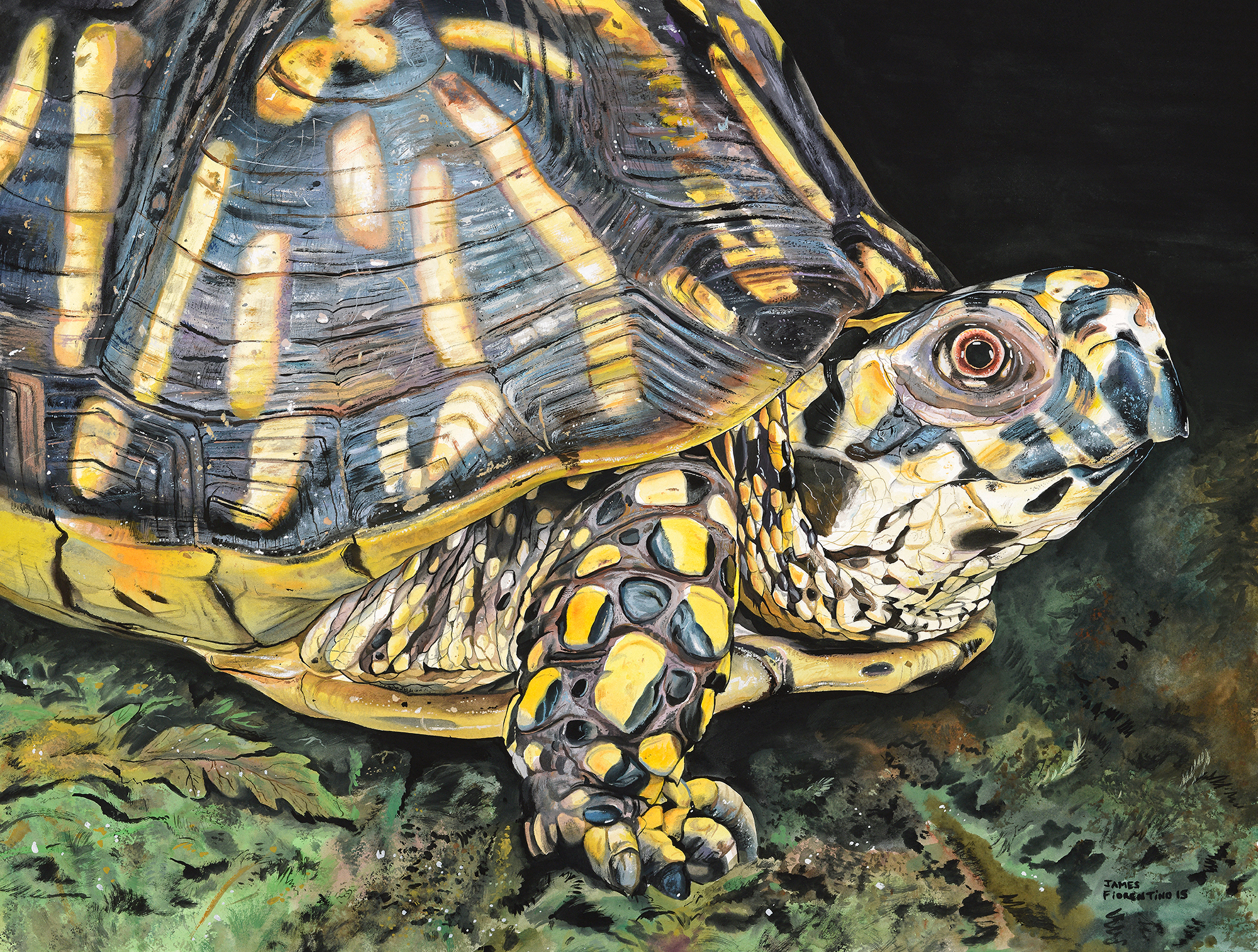 species on the edge art essay contest acirc conserve wildlife eastern box turtle by james fiorentino