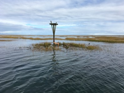 A newly installed platform on the flooded marsh.