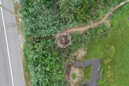 Aerial view of an active nest.