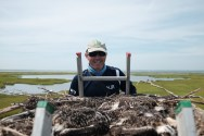 CWF Osprey Bander Apprentice, Northside Jim climbs a ladder to check a