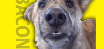 Talking pet goes from YouTube to Hollywood