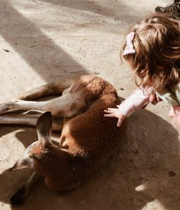 Alabama Gulf Coast Zoo Kangaroo Encounter