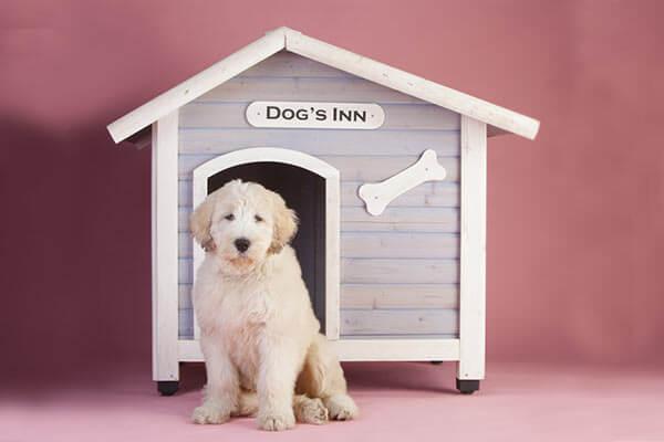 niches barrieres et portes pour chien