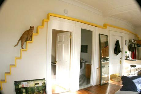 escalier pour chat