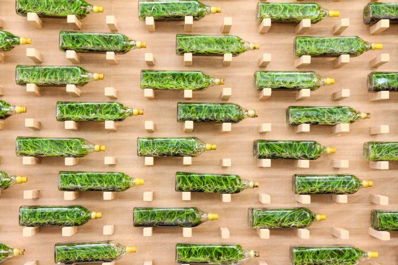 diy un mur vegetal avec vos bouteilles