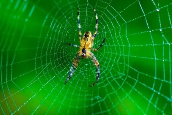 """Résultat de recherche d'images pour """"photos de toiles d'araignées"""""""