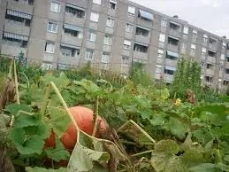 Potagers urbains 4