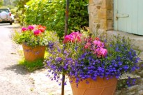 Ruths Flower Tubs