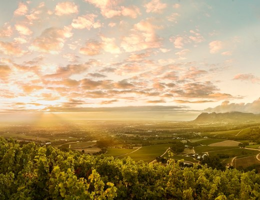 The Constantia Valley