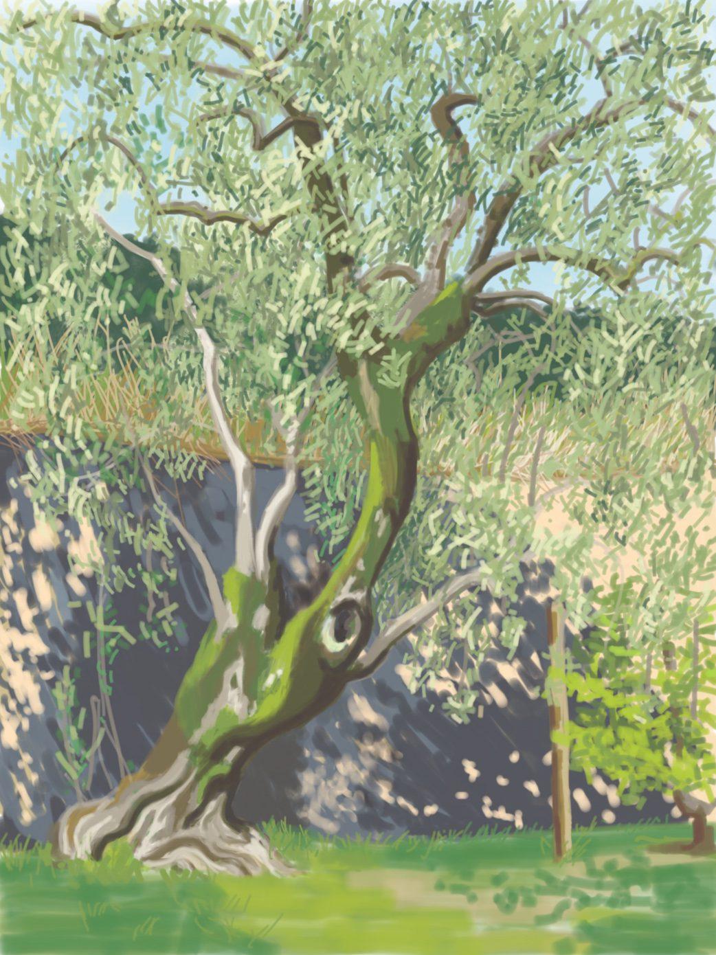 Olivenbaum an einer Mauer, digital, 2016