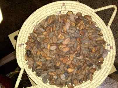 Semillas de Cacao para elaboración de Chocolate y derivados