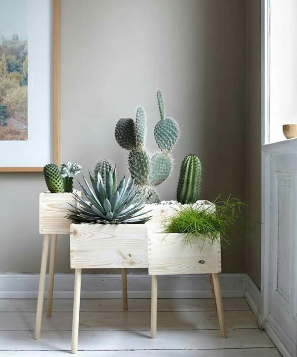 plantas ideales cactus