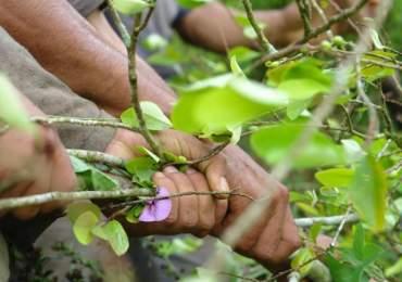 Militares iniciaron operativo de erradicación forzada en zona rural de Buenaventura