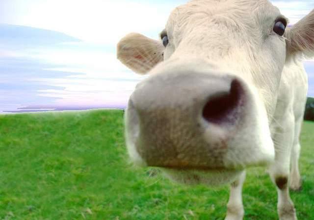 """""""Tu plato de carne contamina más que tu auto"""" Ambiente y Sociedad"""
