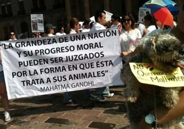 Maltrato animal al código penal