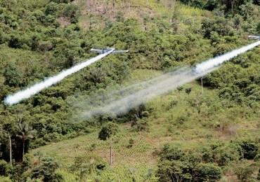 El regreso del glifosato, una amenaza para campesinos en zonas cocaleras