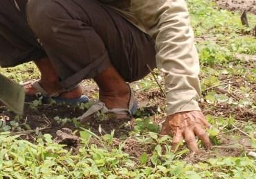 Coordinador Nacional Agrario denuncia persecución judicial