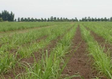 Los agronegocios una violencia silenciosa contra las mujeres