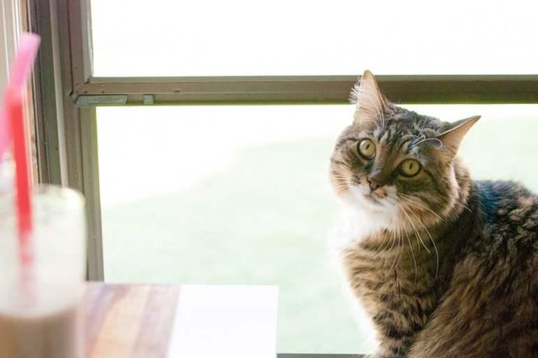 cat in window sill
