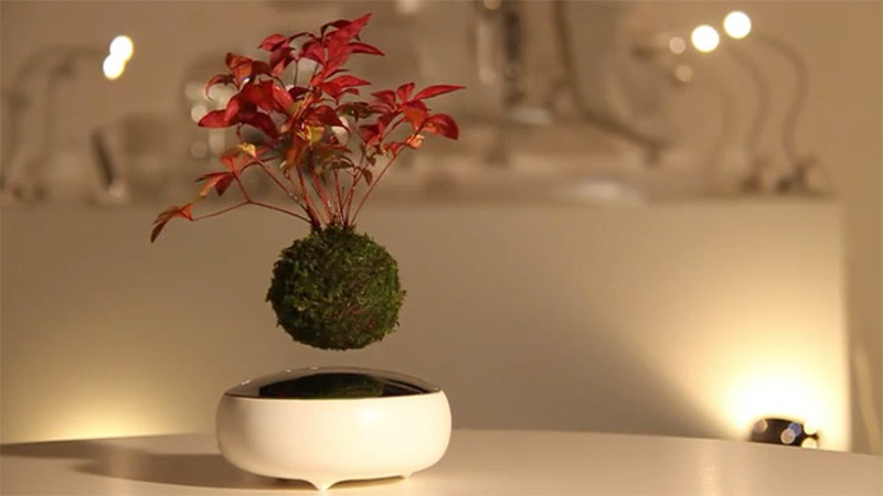 The 'Air Bonsai' makes it possible for your plant to float in mid-air