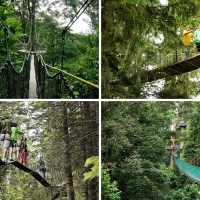 10 Treetop Walks Designed For Nature Lovers