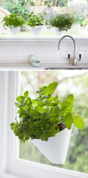indoor hanging garden ideas Indoor Garden Idea - Hang Your Plants From The Ceiling