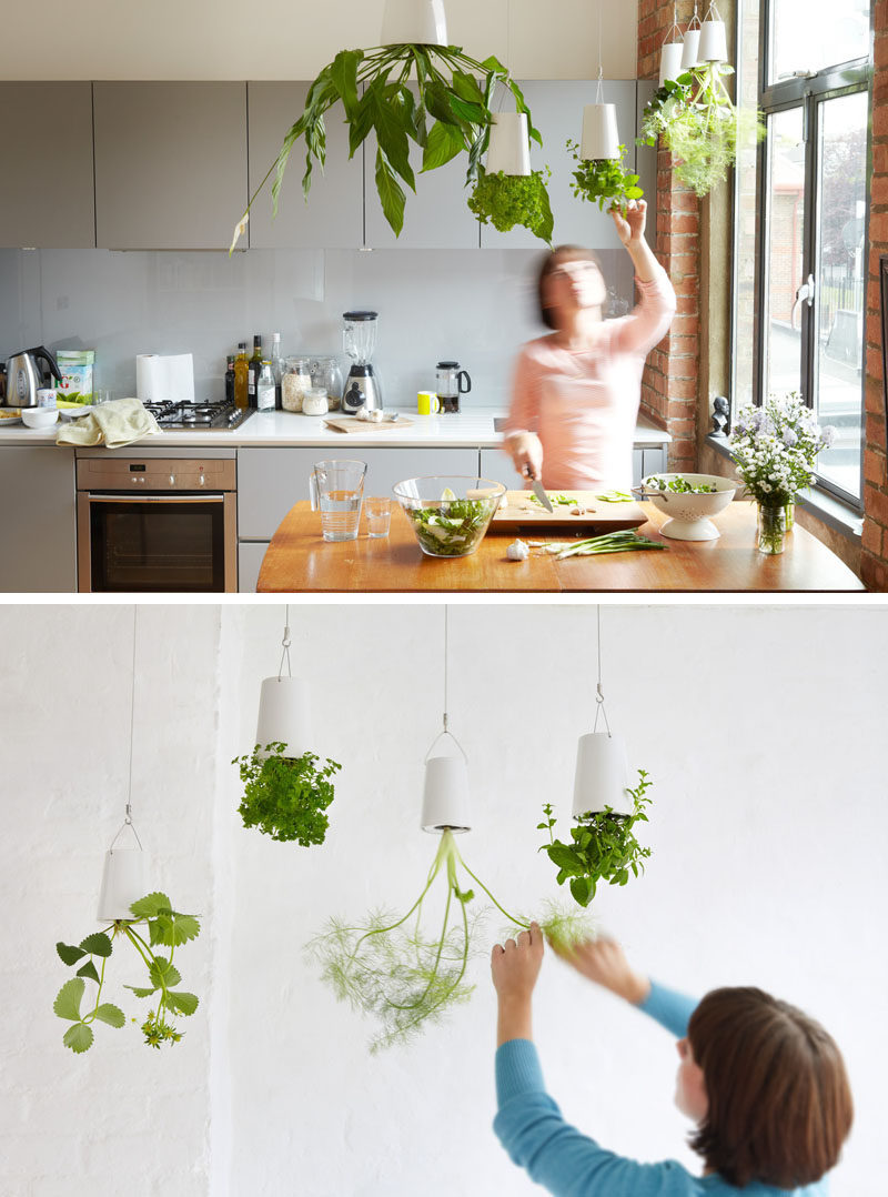 Indoor Garden Idea - Hang Your Plants From The Ceiling & Walls on Plant Hanging Ideas  id=54739