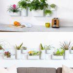 Indoor Garden Idea Hang Your Plants From The Ceiling Walls