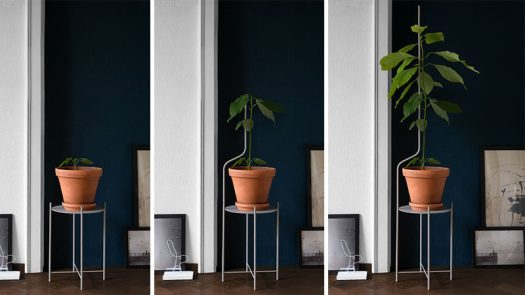 Swiss design company SUPERLIFE, have created Liana, a minimalist plant stand that evolves with your plant. #ModernPlantStand #PlantStand #Design #Furniture