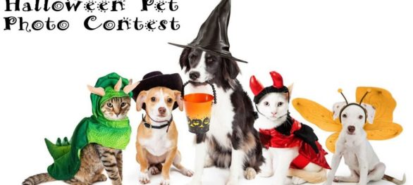 Halloween Pet Photo Contest - Enter To Win A $50 Gift Card