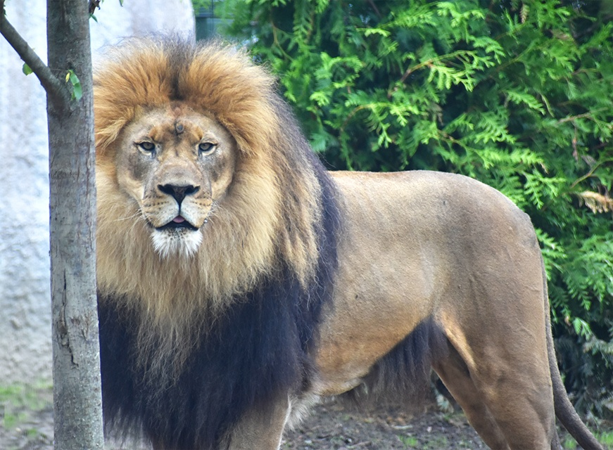 The Akron Zoo Sweepstakes – Win A year long Family Membership