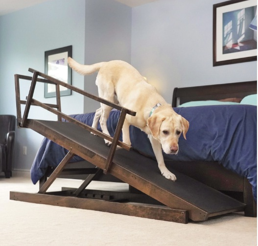 Modern Dog Magazine DoggoRamps Giveaway