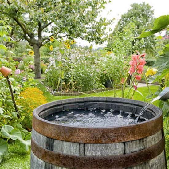 Rain Barrel Garden Giveaway