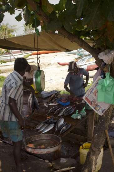 Voyages au Sri Lanka: Des poissons tout droit sortis du bateau