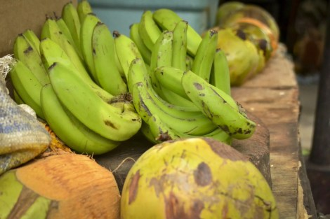 Jamaica Vacations: Bananas and cocos
