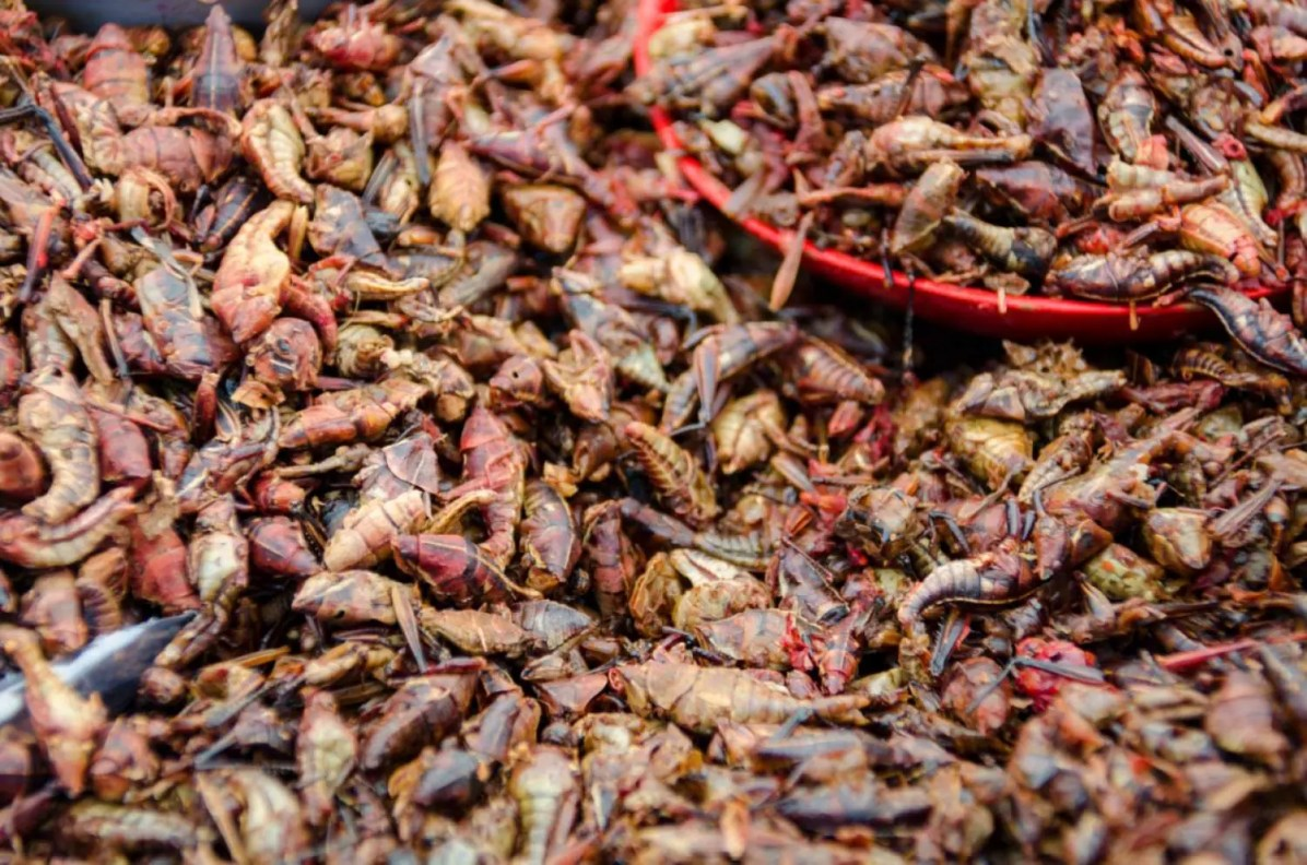 Chapulines, deep-fried and seasoned grasshoppers - What to eat in Oaxaca City