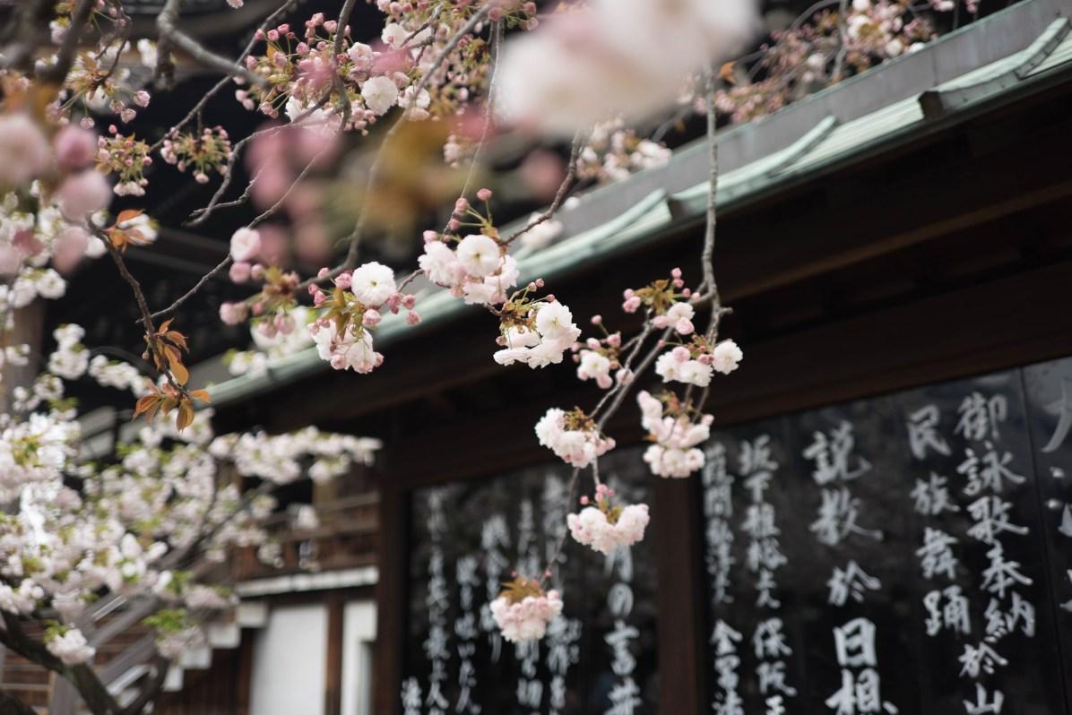 Where to Stay in Osaka- Osaka Travel Blog: Osaka Japan - CC0 / Public Domain