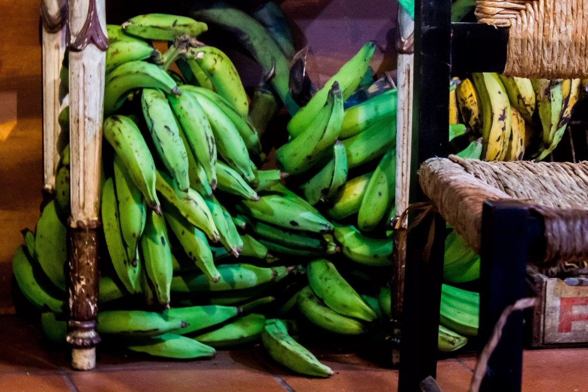 Kenyan food : plantain cooking bananas