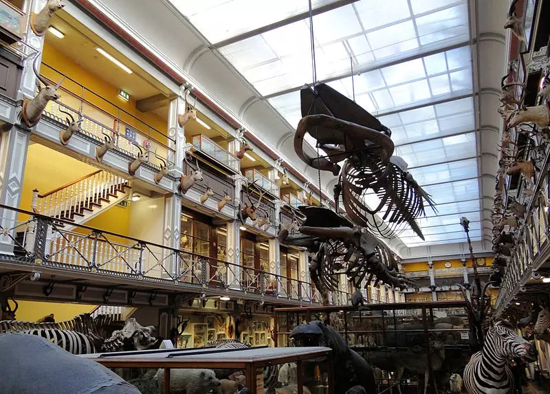 National Museum of Ireland - Natural History - photo by Bjørn Christian Tørrissen under CC-BY-SA-3.0