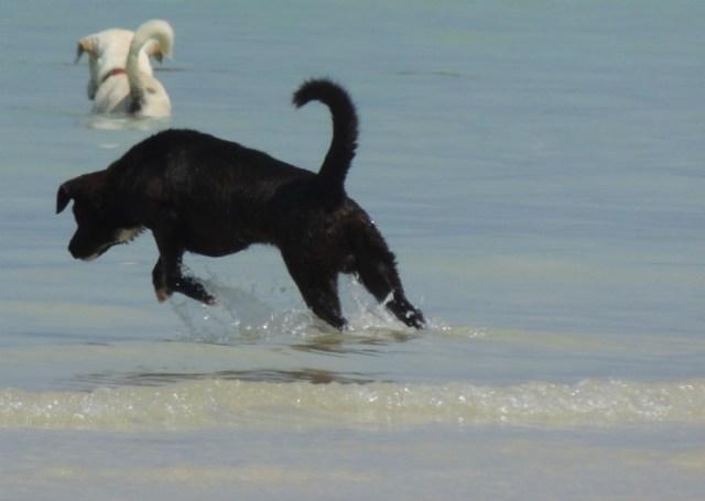 cachorros praia tailândia