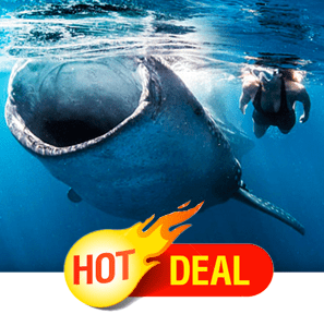 Whale Shark Tour Cancun Hor Deal