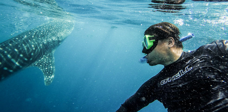 5 healthy reasons of swimming with the whale sharks this summer