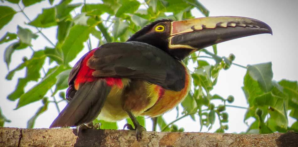 Bird watching growing opportunity for local ecotourism industry