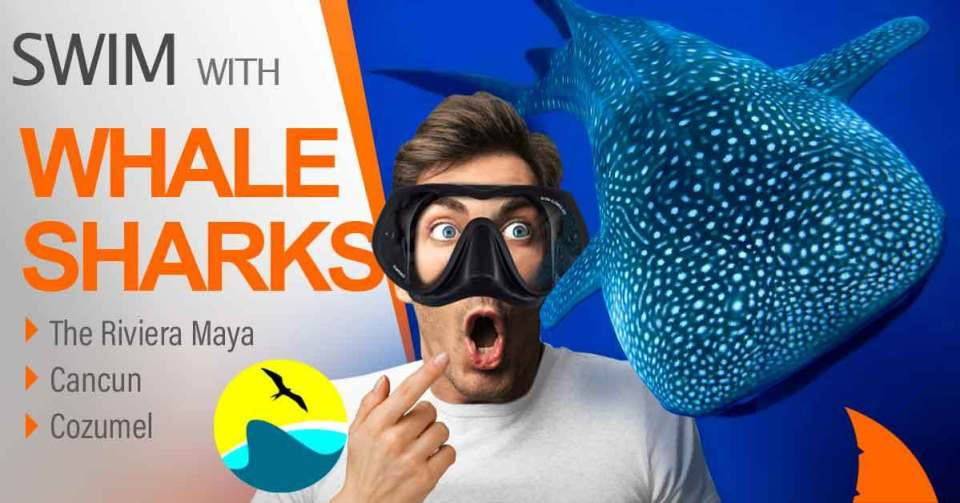 whale shark tour cancun mexico book now