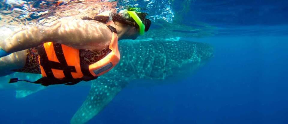 private whale shark tour cancun isla mueres mexico