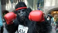 Runners will be aping around as the Great Gorilla Run swings into London