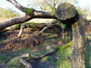 Curiosity of the Week: wish tree, Cumbria