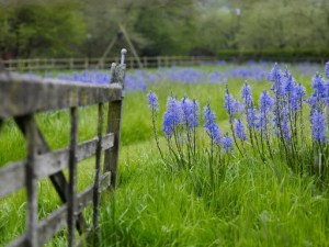 Yeo Valley - Garden Tours